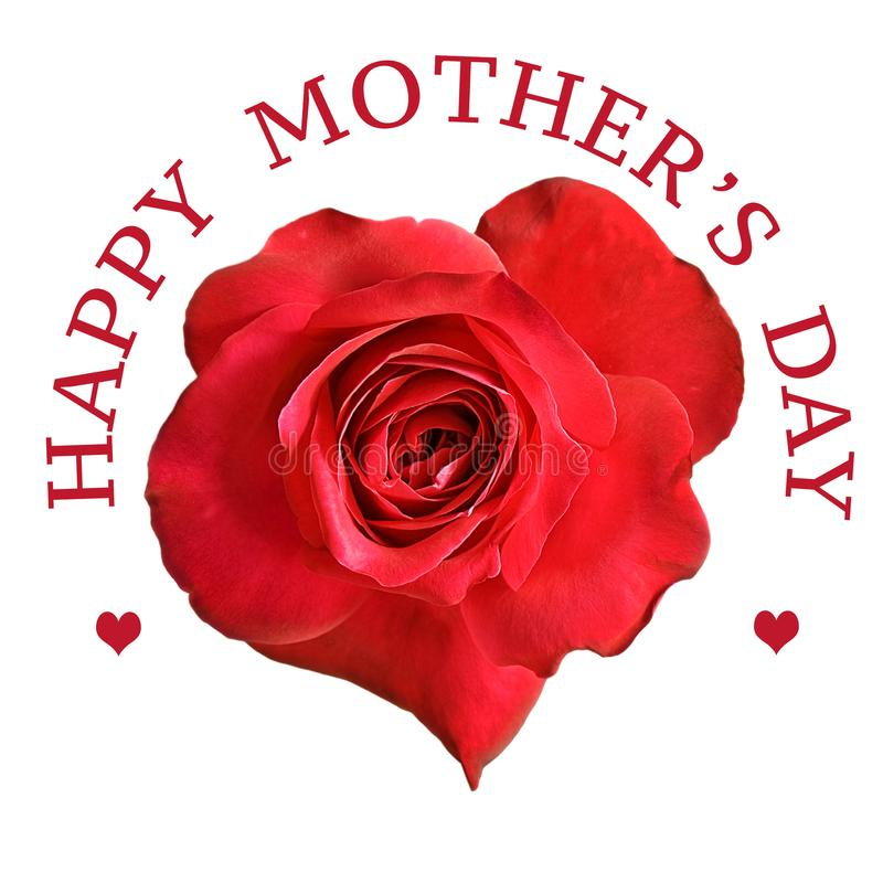Flor da rosa do vermelho para o dia de mães foto de stock royalty free