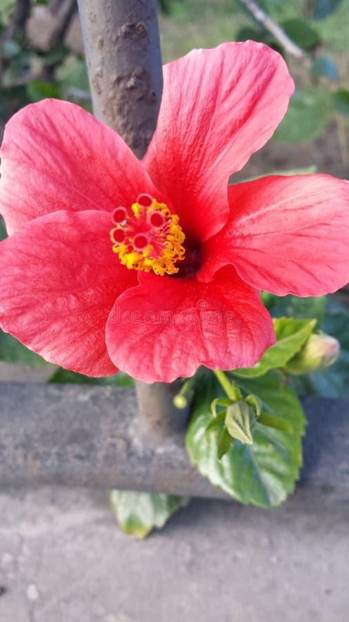 Flor da sapata imagem de stock