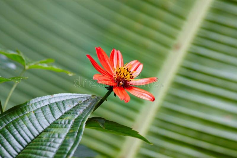Flor da Selva Tropical imagem de stock
