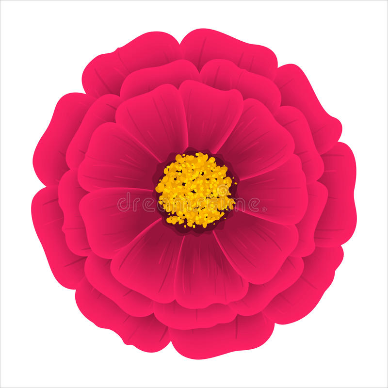 Flor Dahlia Isolated en un fondo blanco libre illustration
