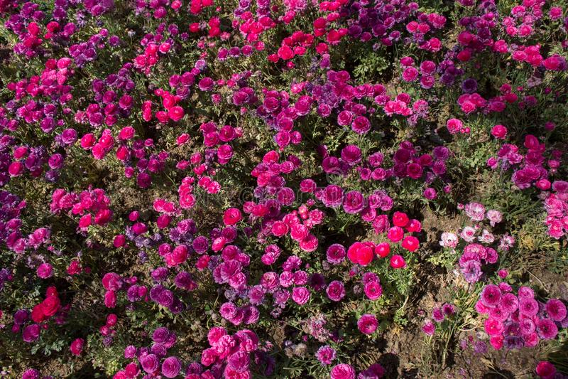 flor das flores que faz um fundo floral foto de stock