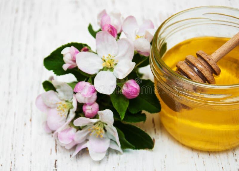 Flor das maçãs com mel foto de stock