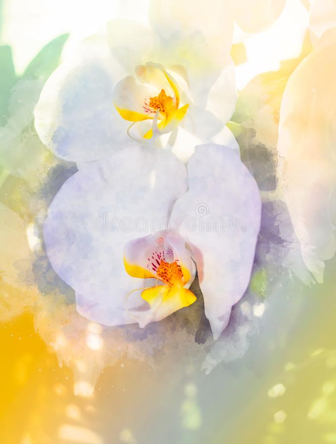 Flor das orquídeas e fundo levemente borrado da aquarela imagem de stock