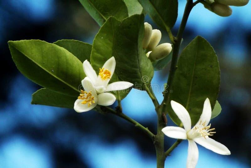 Flor de azar. stock photography