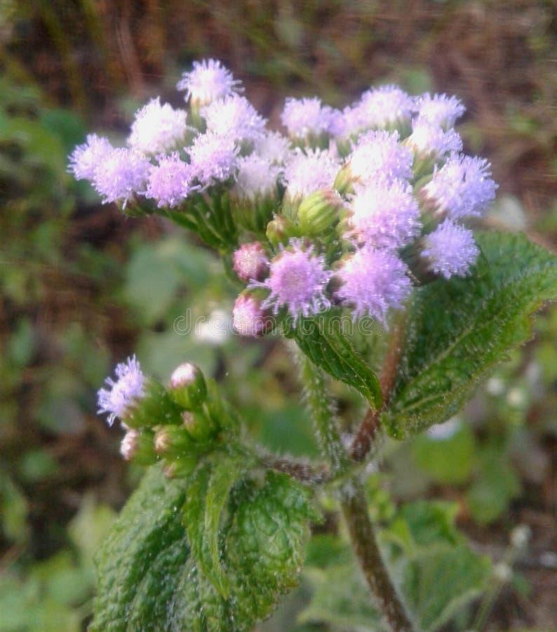 Flor de beuty imagen de archivo libre de regalías