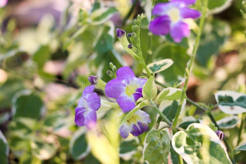 Flor de Blossum foto de archivo libre de regalías