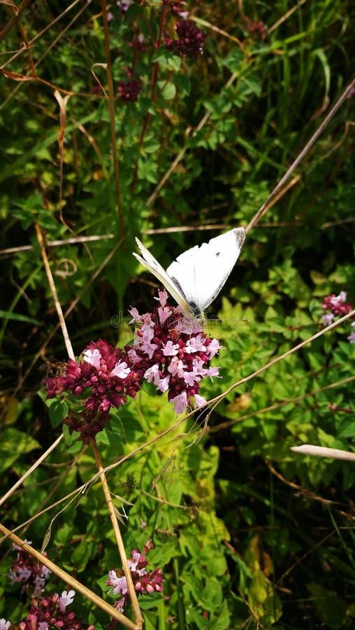 Flor de borboleta fotografia de stock