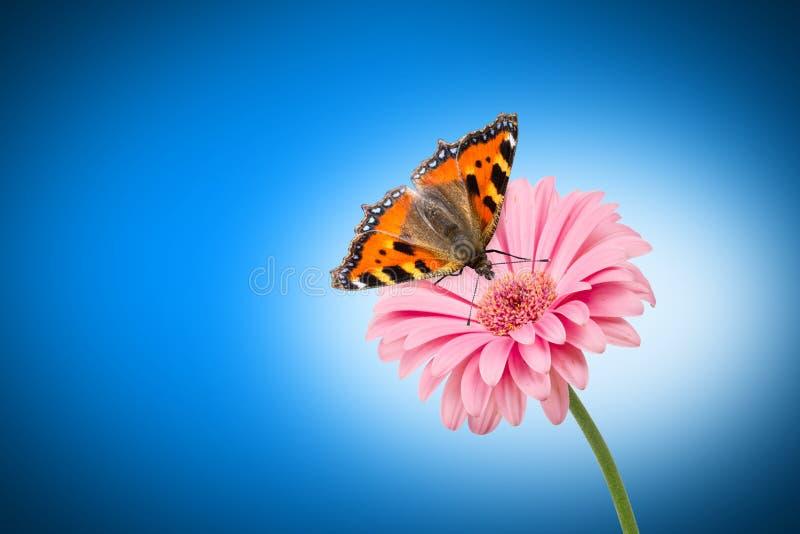 Flor de Butterlfy imagem de stock royalty free