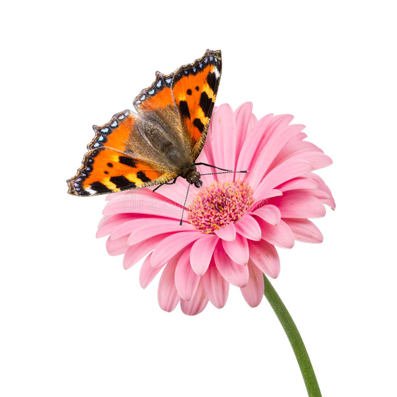 Flor de Butterlfy fotografia de stock