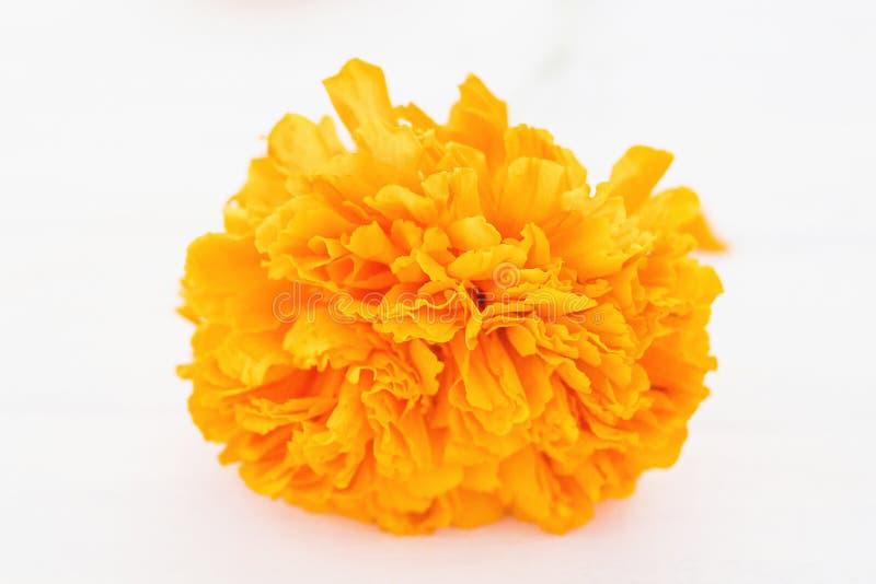 Flor de cempasuchil, mexican flowers in Day of the Dead México. Dia de muertos royalty free stock photos