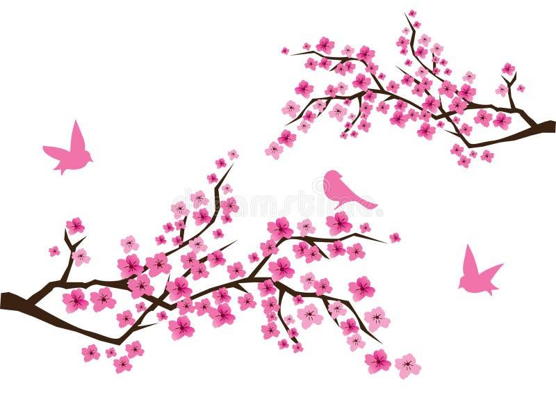 Flor de cereja ilustração stock