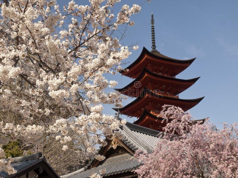 Flor de cereja com pagoda imagem de stock royalty free