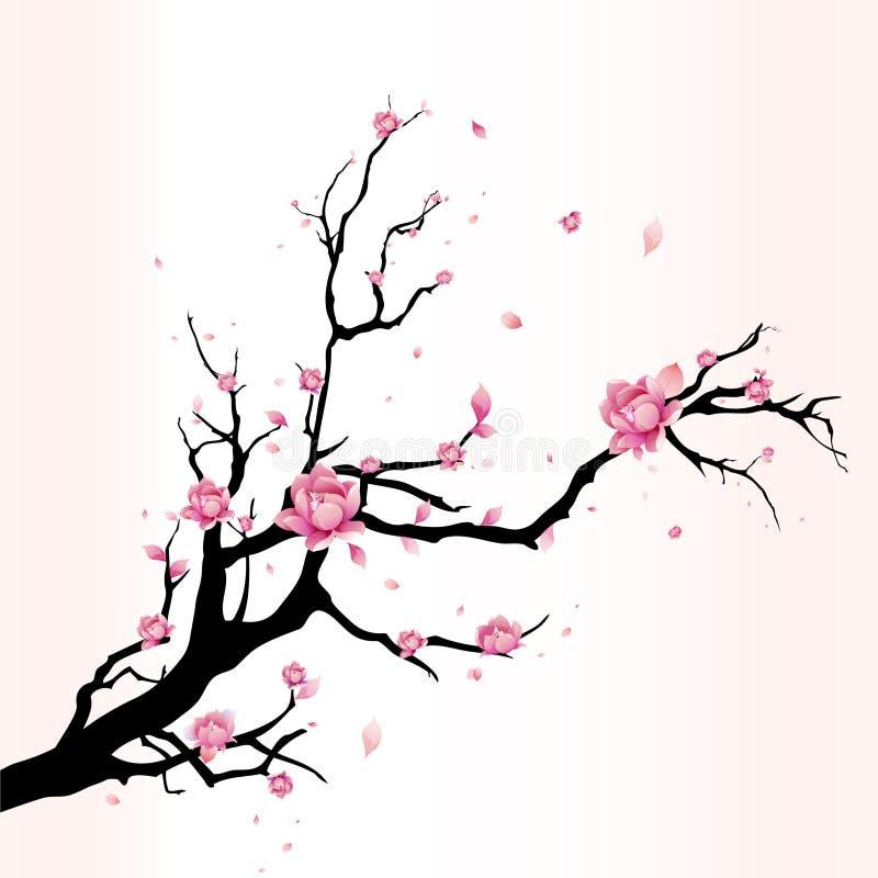 Flor de cerejeira fotos de stock royalty free