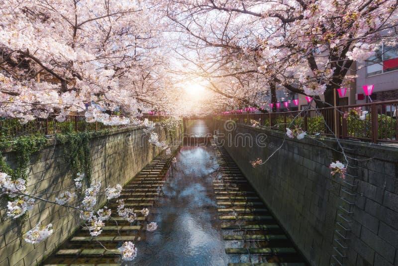 A flor de cerejeira alinhou o canal de Meguro no Tóquio, Japão primavera em abril no Tóquio, Japão foto de stock