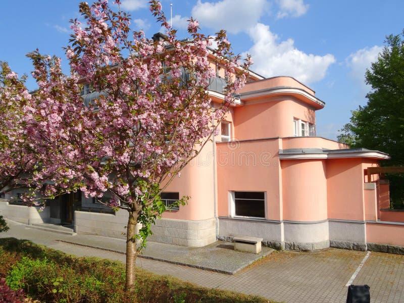 Flor de cerejeira na frente da construção imagens de stock