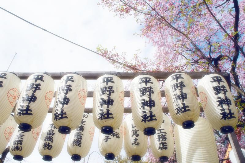 Flor de cerejeira no templo de Japão foto de stock royalty free