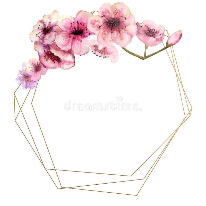 Flor de cerejeira, Sakura Branch com as flores cor-de-rosa no quadro do ouro e no fundo branco isolado Imagem da mola Quadro wate ilustração stock