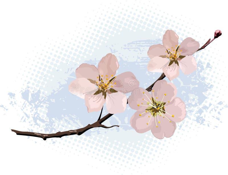 Flor de cereza rosado ilustración del vector