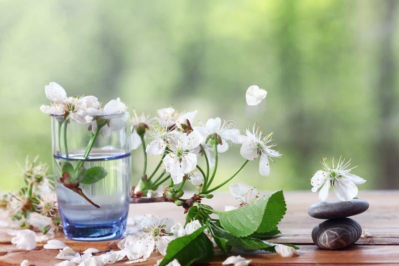 Flor de cerezo en el fondo blanco de cristal foto de archivo