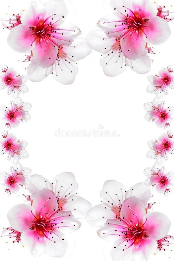 Flor de cerezo para fondo de carta o postal stock de ilustración