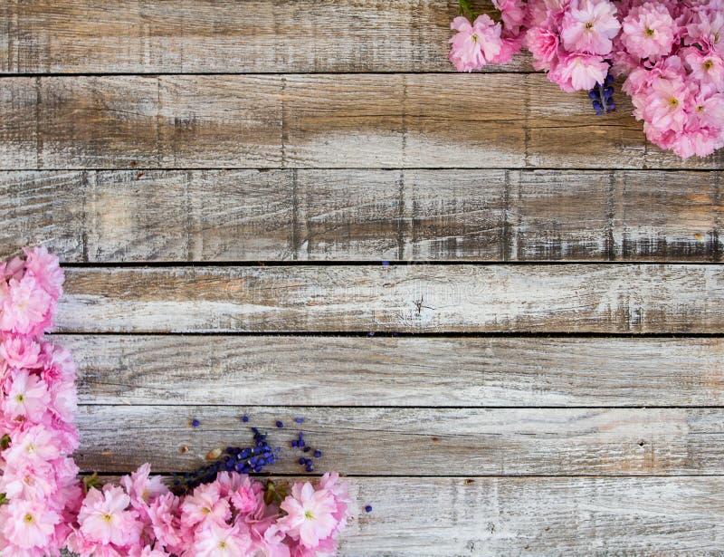 Flor de cerezo roja con el jacinto de uva dos en la madera a enmarcar imagen de archivo libre de regalías
