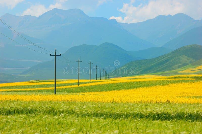 Flor de China Qinghai e paisagem do campo imagem de stock