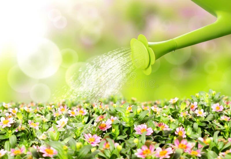 Flor de colada del agua libre illustration