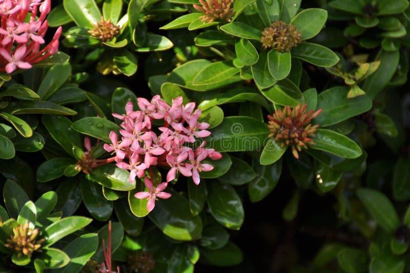 Flor de Colurful con las hojas verdes fotografía de archivo