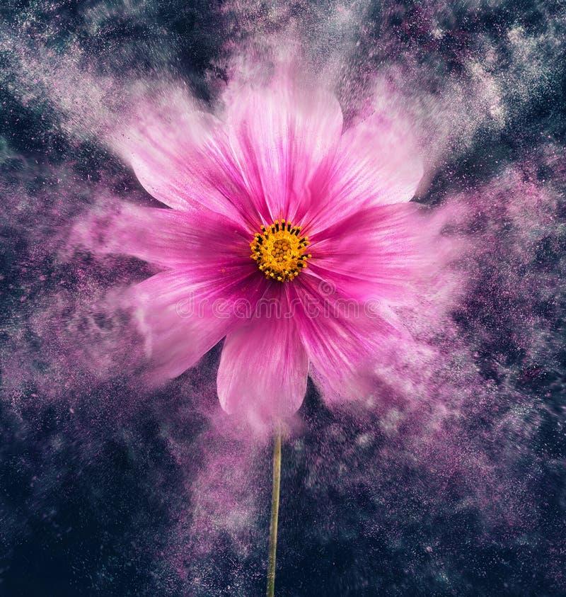 Flor de Cosmea stock de ilustración