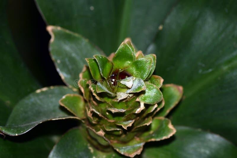 Flor de Costas en arboreto imágenes de archivo libres de regalías