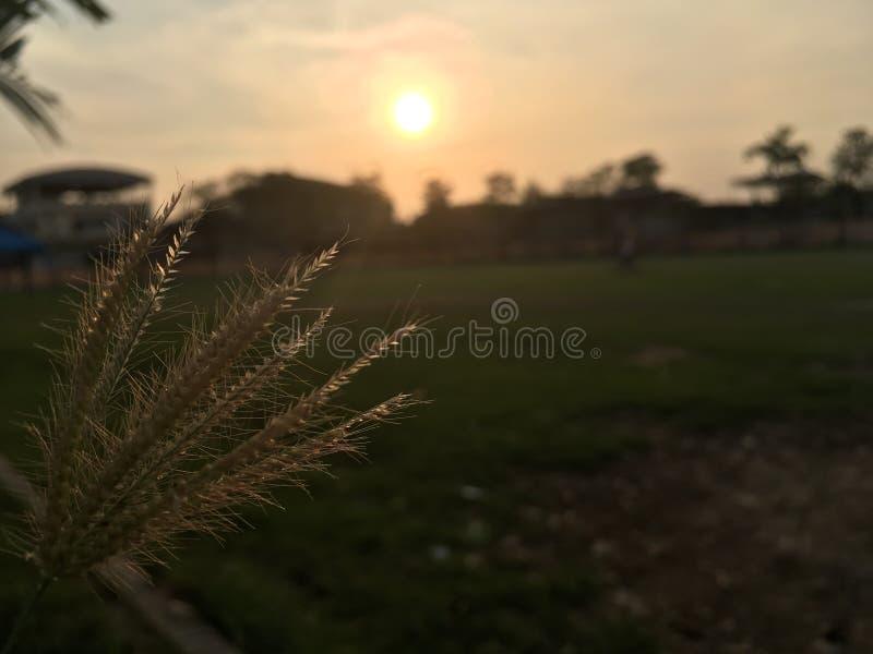 Flor de cristal con el fondo de la puesta del sol fotos de archivo