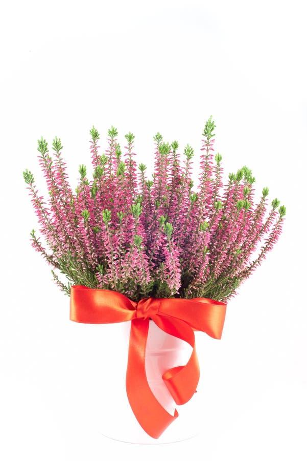Flor de Erica imagem de stock