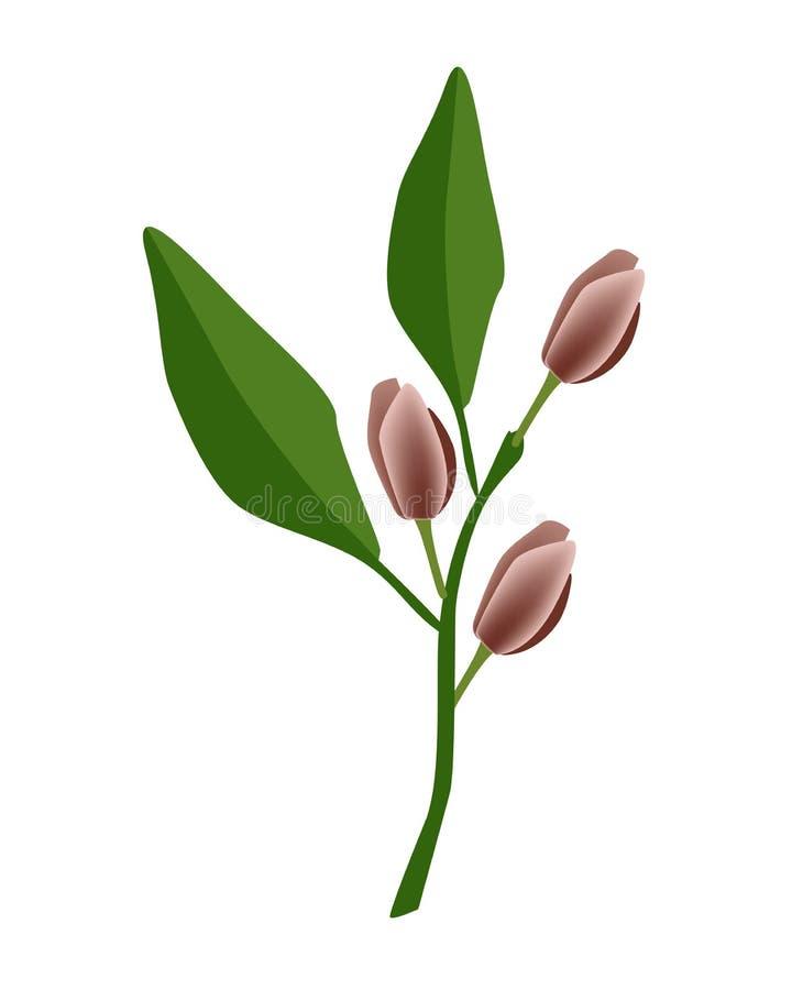 Flor de Figo de la flor de la magnolia del vino de Oporto o de la magnolia ilustración del vector