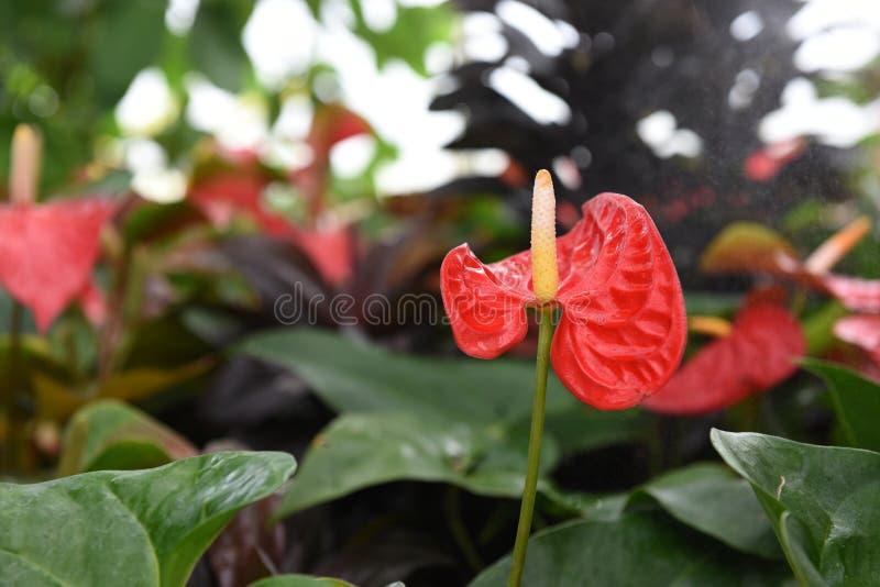 Flor de flamingo fotos de stock royalty free