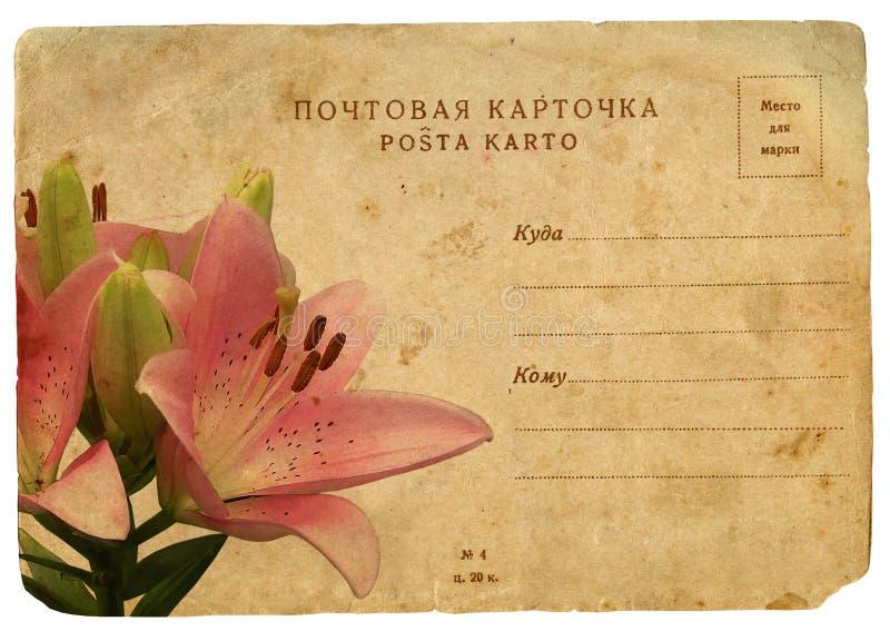 Flor de florescência do lírio cor-de-rosa. Cartão velho ilustração royalty free