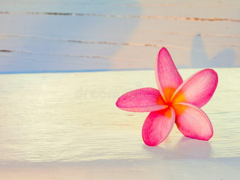 Flor de Frungipani en la madera blanca fotografía de archivo