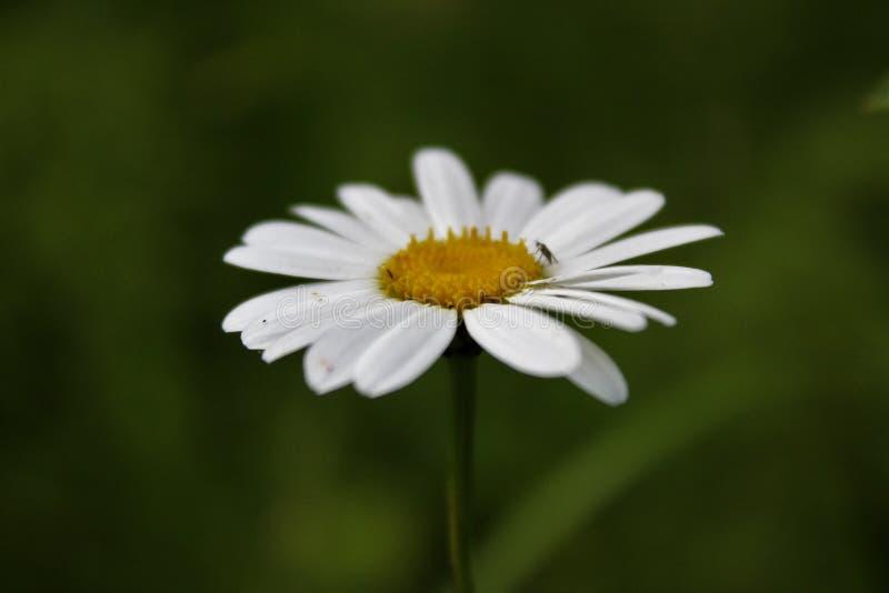 Flor de Fuuny imagens de stock