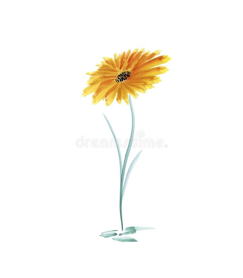 Flor de Gerber en un fondo blanco libre illustration