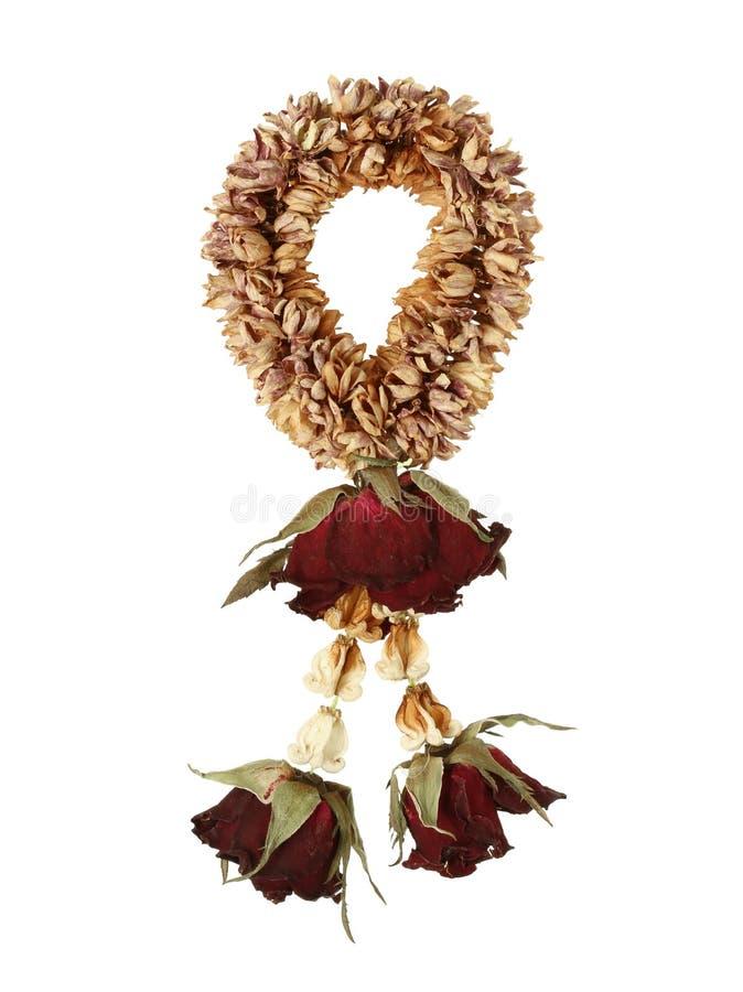Flor de guirnalda secada imágenes de archivo libres de regalías