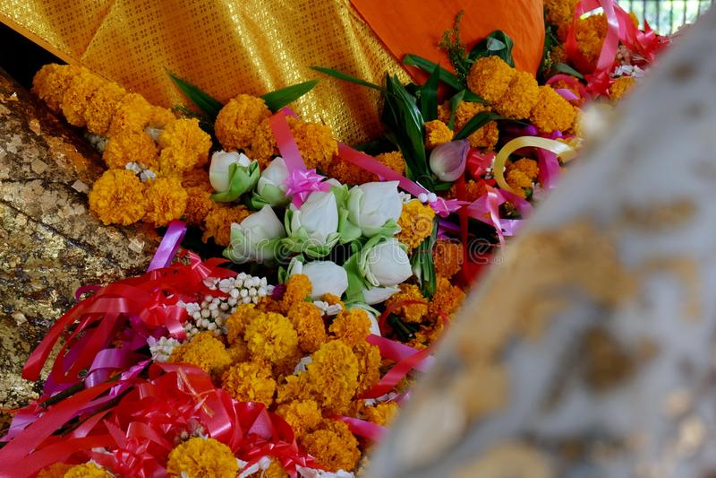 A flor de lótus é adorada por Lord Buddha foto de stock