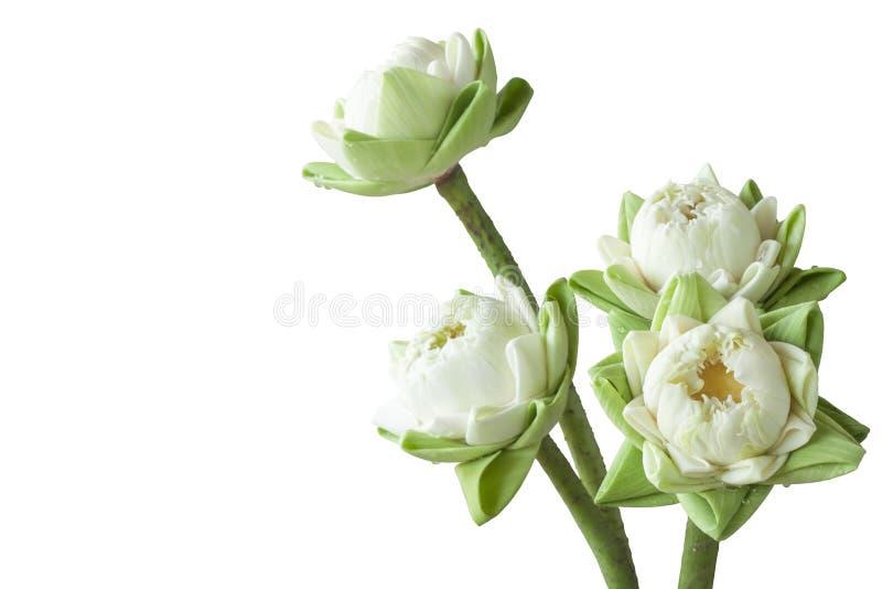 A flor de lótus brancos dobra as pétalas para a adoração a imagem/estátua da Buda isolada em um fundo branco foto de stock royalty free
