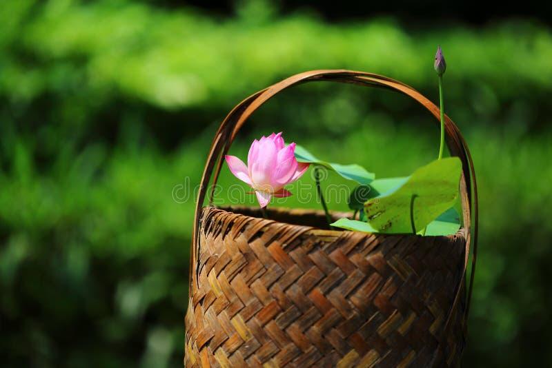Flor de lótus cor-de-rosa imagem de stock