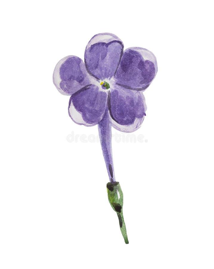 Flor de la acuarela de la inflorescencia de la lila fotos de archivo libres de regalías