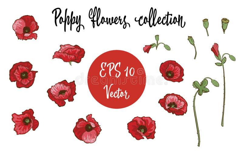 Flor de la amapola Amapolas rojas aisladas en el fondo blanco Ilustración del vector ilustración del vector