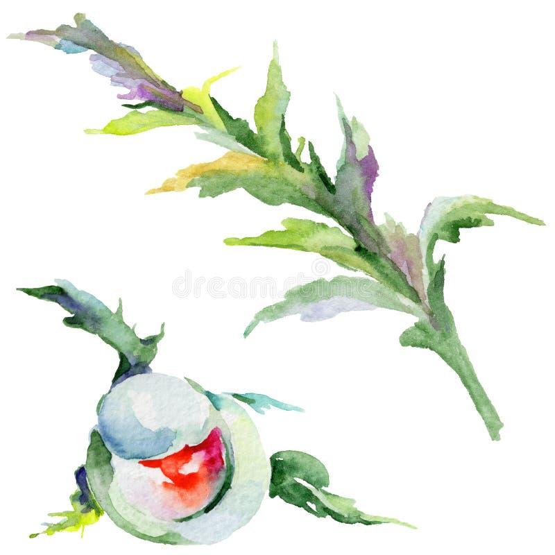 Download Flor De La Amapola Del Wildflower En Un Estilo De La Acuarela Aislada Stock de ilustración - Ilustración de decoración, aguafuerte: 100526850