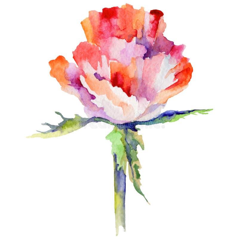 Download Flor De La Amapola Del Wildflower En Un Estilo De La Acuarela Aislada Stock de ilustración - Ilustración de ilustración, tinta: 100526871