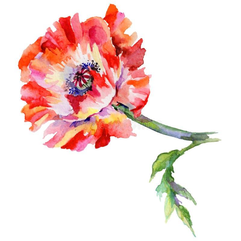 Download Flor De La Amapola Del Wildflower En Un Estilo De La Acuarela Aislada Stock de ilustración - Ilustración de hoja, flora: 100526882