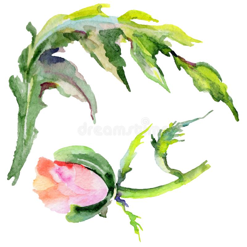 Download Flor De La Amapola Del Wildflower En Un Estilo De La Acuarela Aislada Stock de ilustración - Ilustración de licencia, caída: 100526883