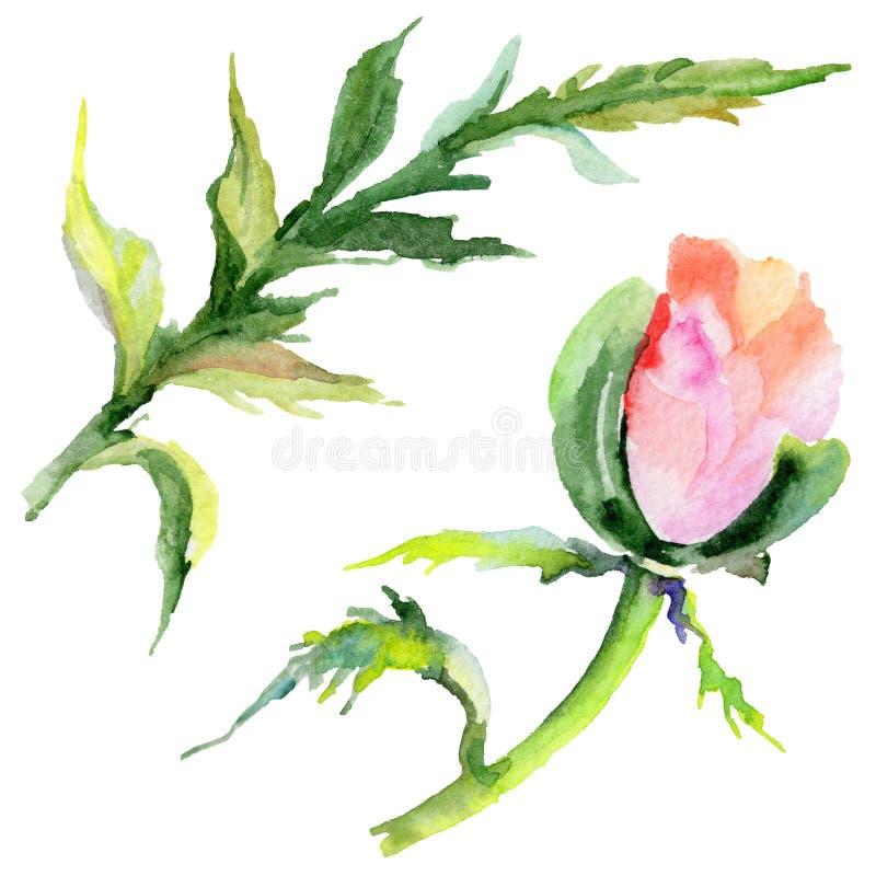 Download Flor De La Amapola Del Wildflower En Un Estilo De La Acuarela Aislada Stock de ilustración - Ilustración de gráfico, deciduous: 100526904