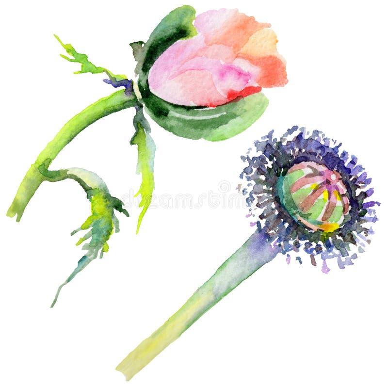 Download Flor De La Amapola Del Wildflower En Un Estilo De La Acuarela Aislada Stock de ilustración - Ilustración de deciduous, floral: 100526919